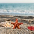 Starfish and seashell on sea sand beach — Stock Photo