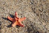 Starfish on sea sand beach — Stock Photo