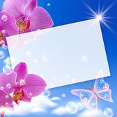 Orchid and butterflies — Stock Photo