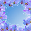 Orchid and stars — Stock Photo