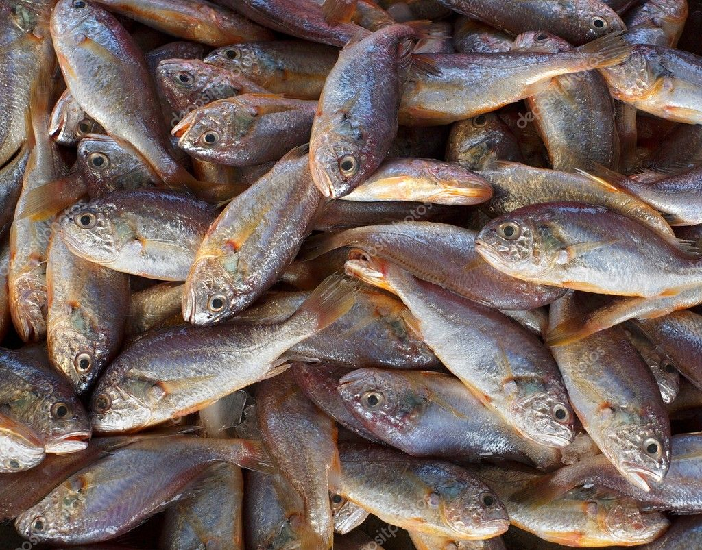 Small edible fish for sale stock photo shiyali 6956212 for Types of edible fish