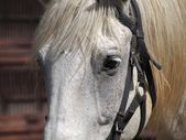 портрет крупным планом лошади — Стоковое фото