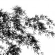 Bamboo Branch Swaying in Breeze — Stock Photo #7608763