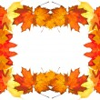 Royalty-Free Stock Photo: Autumn leaves frame