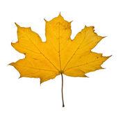 Jesień liść klonu — Zdjęcie stockowe
