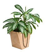Eco bag and plant isolated — Stock Photo