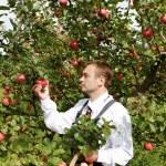 Man in garden. — Stock Photo