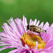 Stock Photo: Insect on flower.