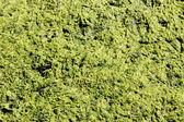 Green slime. — Stock Photo