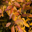 Autumn many-coloured leaves — Stock Photo