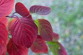 Folhas de outono cor de muitos — Foto Stock