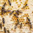 Stock Photo: Bees on honeycombs