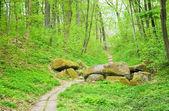 Forest — Foto de Stock