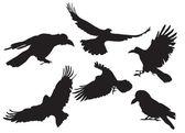 Crow silhouette — Stock Vector