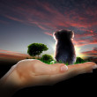 Little koala watching the sunset - Stock Photo