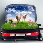 valigia rosso con il verde della natura all'interno — Foto Stock