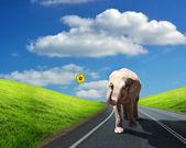 Elephant walking along the road — Stock Photo