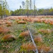 Autumn landscape with bog. — Stock Photo #7775233