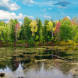 Panorama of the autumn woods and lakes — Stock Photo