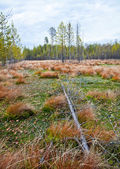 Autumn landscape with a bog. — Stock Photo