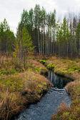 Ruisseau dans les bois. la nature de la sibérie. — Photo