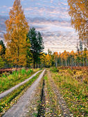 Evening in the autumn forest — Stock Photo