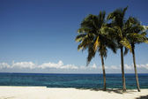 Palm trees on the beach — Stock Photo