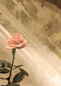 Vintage background with rose — Stock Photo