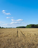 Field in a summer. — Stock Photo