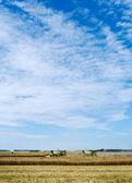 осень на поле. — Стоковое фото