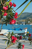 Beautiful pink flowers on Poros embankment, Greece — Stock Photo