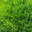 Green lawn — Stock Photo #6856338