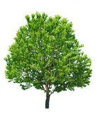 白のツリー — ストック写真