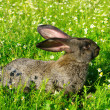 A rabbit - Foto Stock