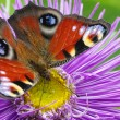 colorful butterfly — Stock Photo #6939017