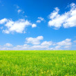Field and white clouds — Stock Photo #6939041