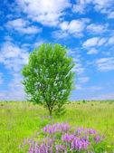 草原上的树 — 图库照片