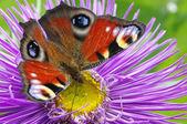 Kleurrijke vlinder — Stockfoto