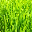 Green lawn — Stock Photo #7301229