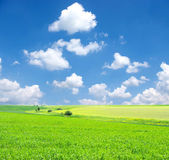Field and white clouds — Stock Photo
