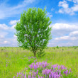 Tree on the green meadow — Stock Photo