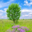 Tree on the green meadow — Stock Photo #7378400
