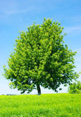 Tree on the green meadow — Stockfoto