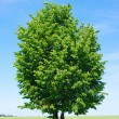 Tree on sky — Stock Photo #7579210