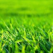 Green lawn — Stock Photo #7579373