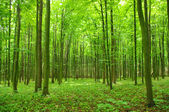 Green forest — Photo