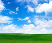 Field and white clouds — Stockfoto