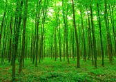 Green forest — Stockfoto