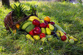 Composition with variety of fruits — Stockfoto