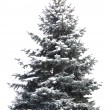 Christmas tree — Stock Photo #7657392